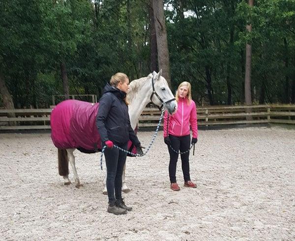 paardecoaching
